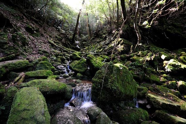 屋久島白谷雲水峡トレッキング ちょっと流れが少ない.JPG