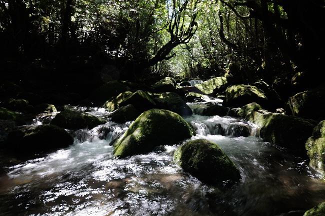 屋久島白谷雲水峡トレッキング 小川の流れ.JPG