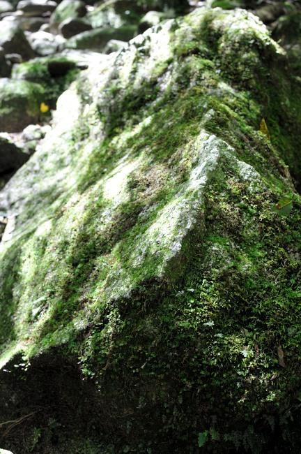 白谷雲水峡トレッキング 苔むす岩.JPG