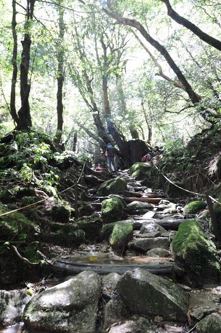 白谷雲水峡トレッキング 苔むす森までもう少し!.JPG
